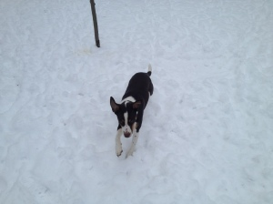 Charlie romps in the snow.
