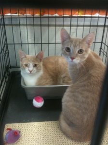 Some ginger cuties I spotted at Petco.