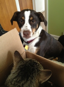 Cora greets a curious Charlie from the safety of a box.