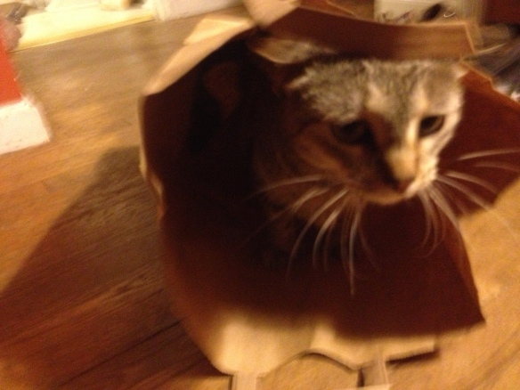 Yep. That's a cat in a bag.