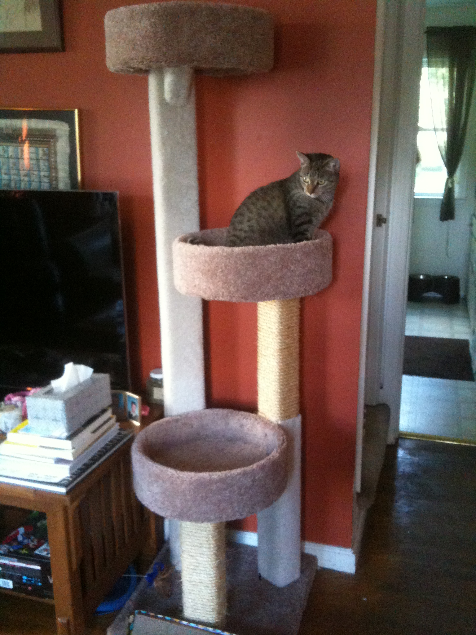 The Biggest Cat Tree In The World Our Furever Family