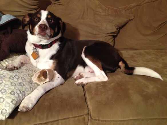Charlie chills on the couch with his favorite bone.
